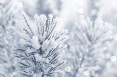 Winter-Hintergrund Lizenzfreie Stockfotos