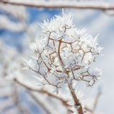 Winter Hoar Frost royalty free stock photo
