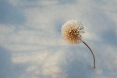 Winter hoar-frost flower Royalty Free Stock Photos