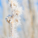 Winter Hoar Frost Macro royalty free stock photo