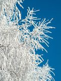 Winter hoar-frost on tree stock photo