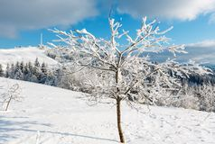 Winter hoar frosting trees,  tower and snowdrifts Carpathian mo. Beautiful winter rime frosting trees, communication tower and snowdrifts on mountain top on blue Royalty Free Stock Photos