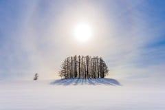 Winter in Hokkaido Stockfotos