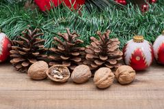 Winter holiday decoration: Blooming Red Poinsettia, Pine, Berry bush, Christmas tree balls, pine cone, walnuts and green garland. On wooden background royalty free stock images