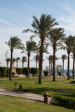 Winter holiday in Egypt, Taba. Stock Images