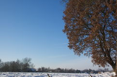 Winter in Holland. Snow on fields Stock Photo