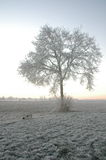Winter in Holland. Snow on fields Royalty Free Stock Image