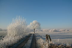 Winter in Holland. Snow on fields Royalty Free Stock Photo