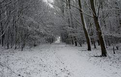 Winter in holland Stock Image