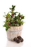 Winter Holly Stock Image