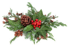 Winter Holly and Greenery. Winter holly with red berries, ivy, cedar cypress, fir and pine cones over white background stock images