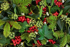 Winter Holly Ivy and Mistletoe Background. Holly, ivy and mistletoe Christmas and winter greenery background. Traditional Christmas greeting card for the holiday royalty free stock photo