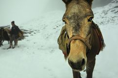 Winter horse Royalty Free Stock Images