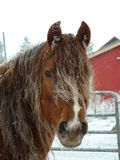 Winter horse. Stallion on a beautiful horfrost morning Royalty Free Stock Image