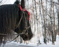 Winter horse Stock Images