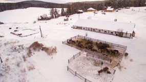 Winter horse farm in . Ural Mountains, Bashkortostan, Russia. Aerial view Royalty Free Stock Images
