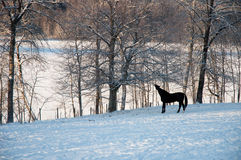 Winter horse Stock Image