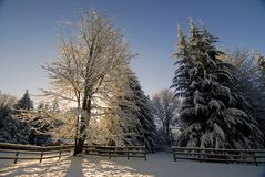 Winter Horse Pasture. Snow covered tree in a horse pasture in Maltby, WA Stock Photography