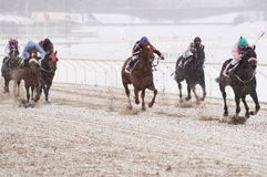 Winter horse racing Royalty Free Stock Images