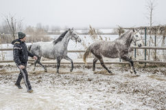 Winter horse training Royalty Free Stock Images