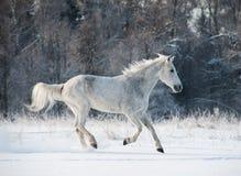 Winter horse Stock Image