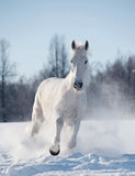 Winter horse Stock Photos