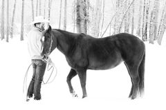 Winter horse Stock Photography