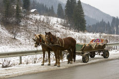Winter horses Royalty Free Stock Images