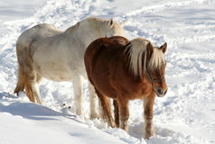 Winter Horses Stock Images