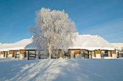 Winter house behind a birch Stock Photography