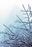 Winter Huangshan - einfrierender Baum Stockbild