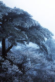 Winter Huangshan - einfrierender Baum Stockfotos