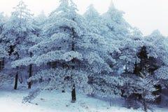 Winter Huangshan - Schnee-Bäume lizenzfreie stockfotos