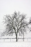 Winter in Hungary Royalty Free Stock Photo