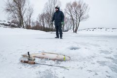 Winter ice fishing concept. Pike fish lies on snow. Fisherman in action on background. Winter ice fishing. Pike fish lies on snow. Fisherman in action on royalty free stock image