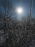 Winter ice landscape. Frozen ice branches of trees against the sun in the snow forest Royalty Free Stock Photos