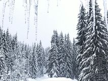 This is winter. Ice and snow royalty free stock photo