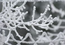 Winter Royalty Free Stock Image