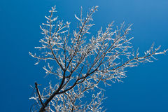 Winter Ice Storm. A photo of an oak tree with its limbs and branches covered with ice after a winter ice storm. It is taken looking up against a blue sky Stock Photography