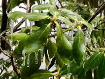 Winter Ice royalty free stock photos