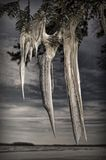 Winter icicles. On a cloudy winter day Stock Photos