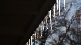 Winter Icicles Melting on the Roof Under the Spring Sun and Dripping from their Tips stock video footage