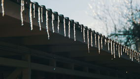 Winter Icicles Melting on the Roof Under the Spring Sun and Dripping from their Tips. Winter icicles melting with water dripping from their tips. The winter stock footage