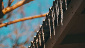 Winter Icicles Melting on the Roof Under the Spring Sun and Dripping from their Tips stock footage