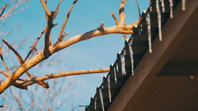 Winter Icicles Melting on the Roof Under the Spring Sun and Dripping from their Tips. Winter icicles melting with water dripping from their tips. The winter stock video