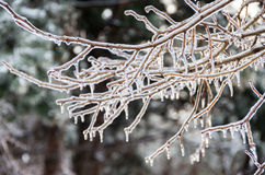 Winter. Icing. Icy trees and shrubs, winter stock photography