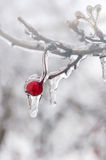 Winter. Icing. Stock Images