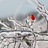 Winter. Icing. Royalty Free Stock Photography