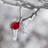 Winter. Icing. Royalty Free Stock Photo
