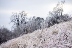 Winter. Icing. Icy trees and shrubs, winter stock photo